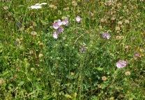Vorschau Blumenwiese am Haus